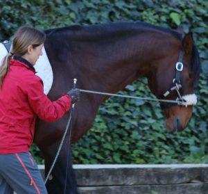 equitacion centrada