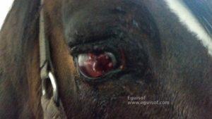 patalogía ocular caballo