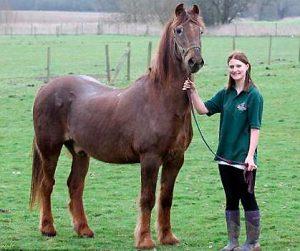shayne_array_caballo_viejo