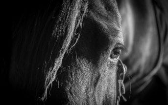 Visión del caballo