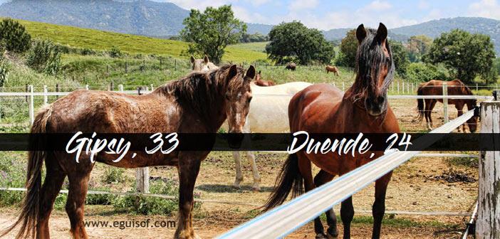Mi caballo se ha hecho mayor