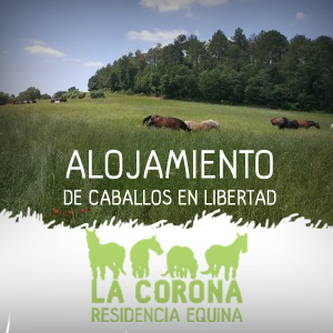 http://www.retirodecaballos.com