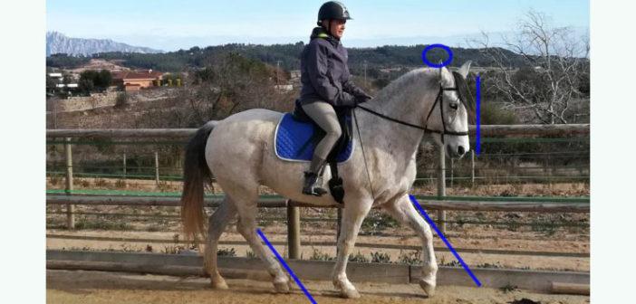 Equitación Centrada, cómo reunir a través de nuestra pelvis
