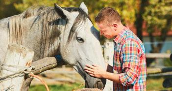 Los caballos preferirán una actitud sumisa a una dominante