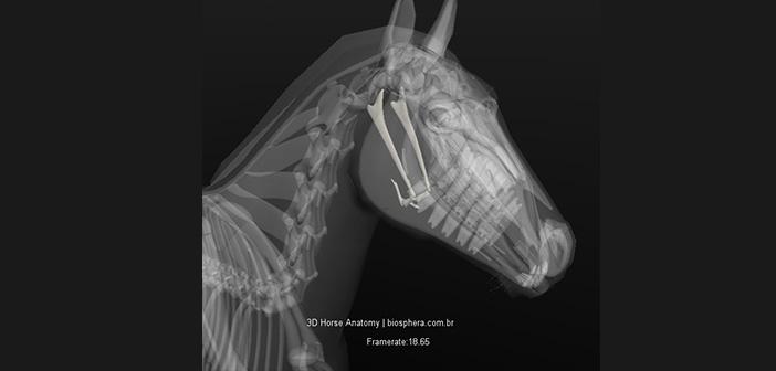 El Aparato Hioideo: una lengua relajada para un caballo conectado