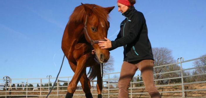 Comportamientos naturales y domesticados de caballos y jinetes