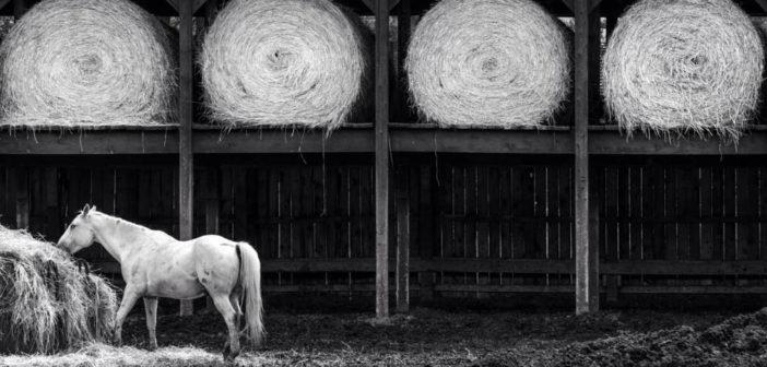¿Qué forraje es el más adecuado para tu caballo?
