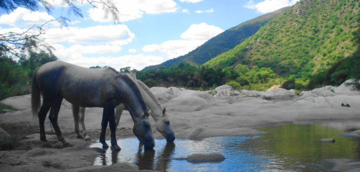¿Qué debe saber el jinete sobre la deshidratación y su caballo?