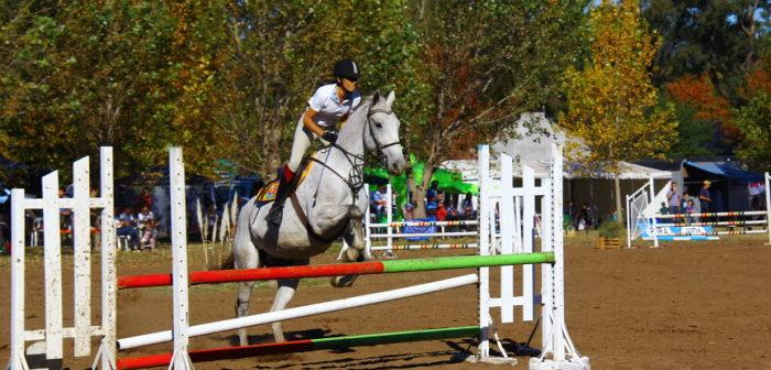 Prevención de lesiones en el caballo II parte: impacto económico