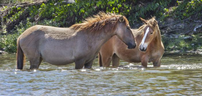 La sensibilidad del caballo al calor