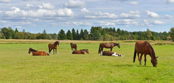 El área de seguridad del caballo: ¿estás dentro?