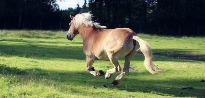 ¿Conoces el movimiento natural de tu caballo?