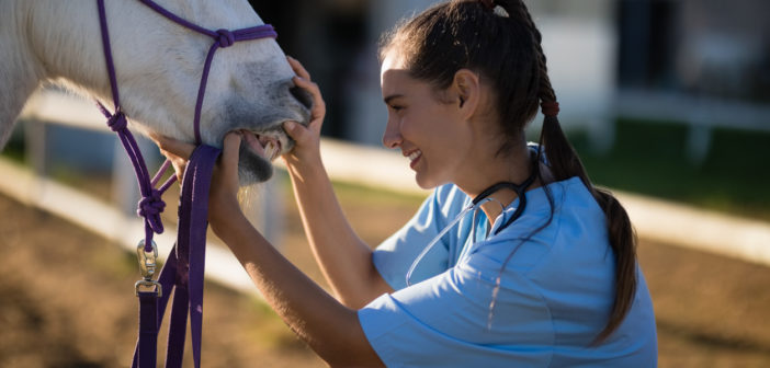 Las características dentarias de los caballos