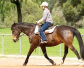 ¿Estamos entrenando a nuestros caballos más de lo necesario?