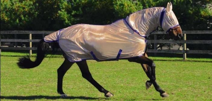 ¿Nos excedemos a la hora de abrigar a nuestros caballos?