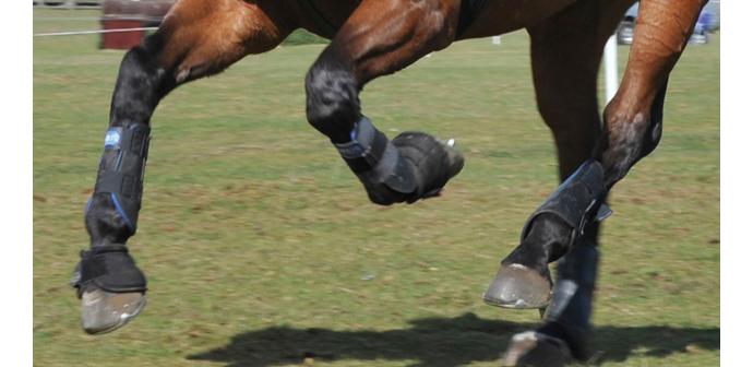 Patología tendo-ligamentosa en el caballo: aplicación de nuevas terapias regenerativas.