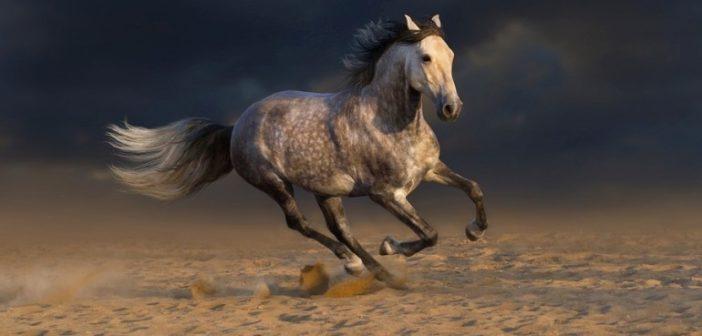 Melanomas en el caballo tordo