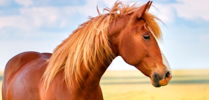 ¿Qué pasa cuando a mi caballo le han diagnosticado osteoartrosis o artrosis?