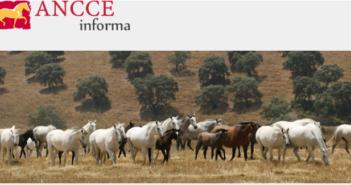 El Libro Genealógico del Pura Raza Española registra en 2018 más de 11.000 ejemplares y casi otros 3.000 nuevos ganaderos