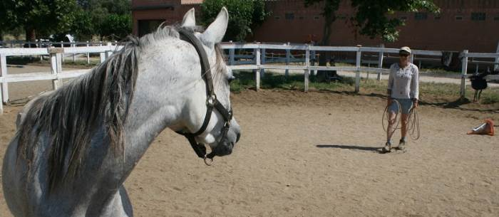 La voz – una ayuda excelente para acompañar la educación y el entrenamiento del caballo