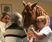El doctor Peyo, un caballo con corazón