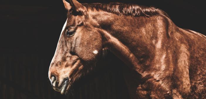 El etograma para detectar dolor en el caballo