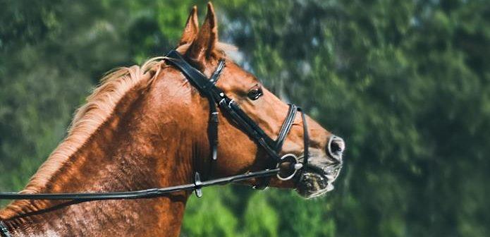Cómo mejorar un caballo  invertido