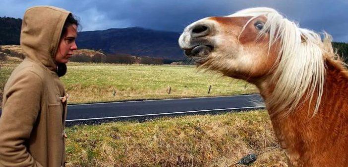 ¿Pueden los caballos oler el miedo?