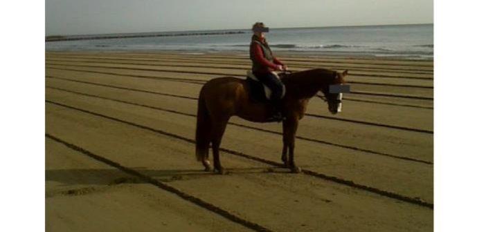 Llamamiento de J.d.B a los propietarios de caballos
