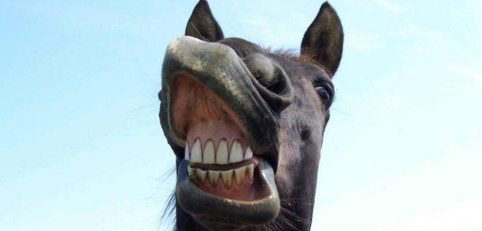 Qué te puede decir el color de las encías de tu caballo