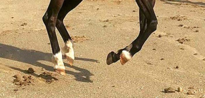 La nutrición y sus consecuencias en el casco del caballo: más allá de la biotina
