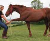 Veterinarios y fisioterapeutas enfrentados en el sector equino