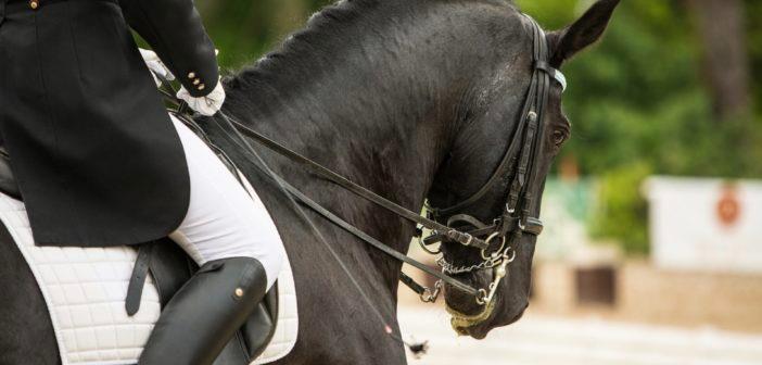 Los jinetes usan más tensión en las riendas de la que los caballos elegirían