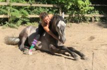Sammy caballo de cine