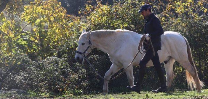Entrenar a tu caballo no es lo mas importante