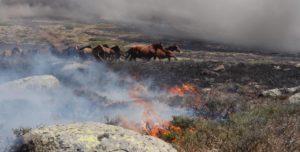 caballos huyendo del incendio