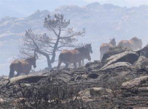 Caballos Incendio La Granja