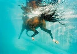 caballos nadando
