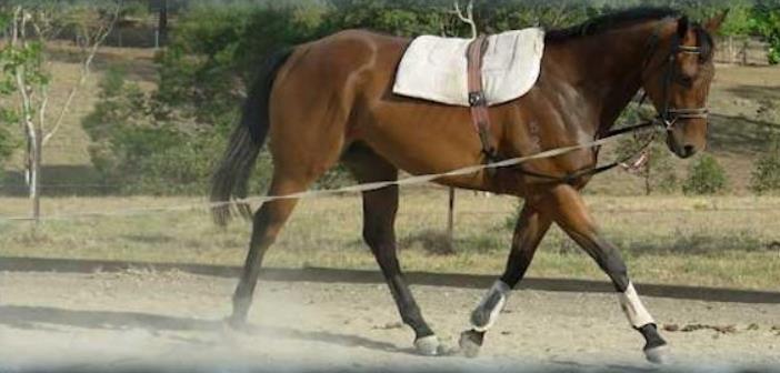 Como poner en forma a nuestro caballo tras las vacaciones