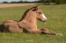 La genética del caballo al nacer