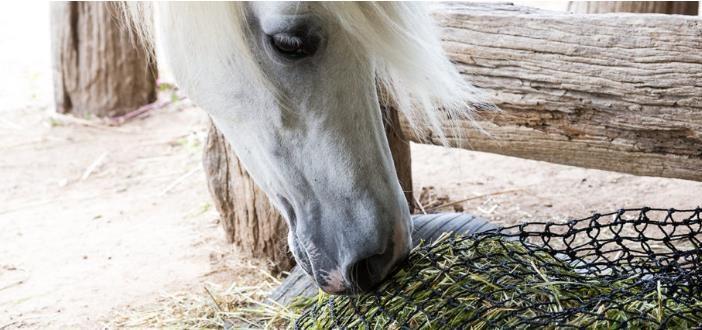 Ralentiza la alimentación de tus caballos durante la noche