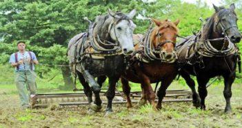 El caballo, el futuro de los viñedos ecológicos
