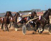 El 80% de los caballos de carreras presenta lesiones en la boca