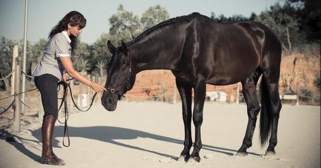 Pie a tierra, los fundamentos de la educación de tu caballo
