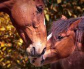 ¿Cómo medimos la calidad de vida de un caballo?