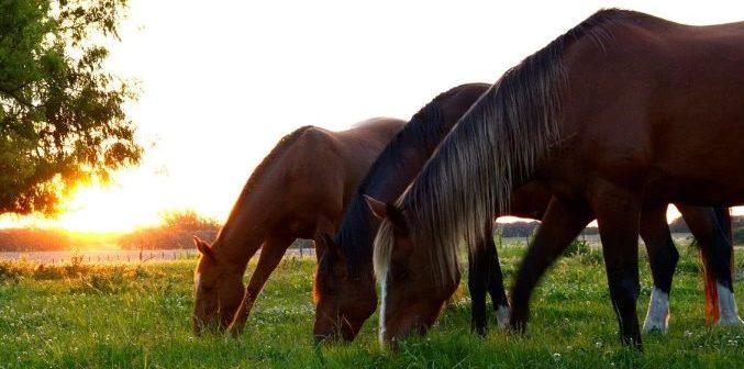 La importancia de la socialización para el caballo de deporte