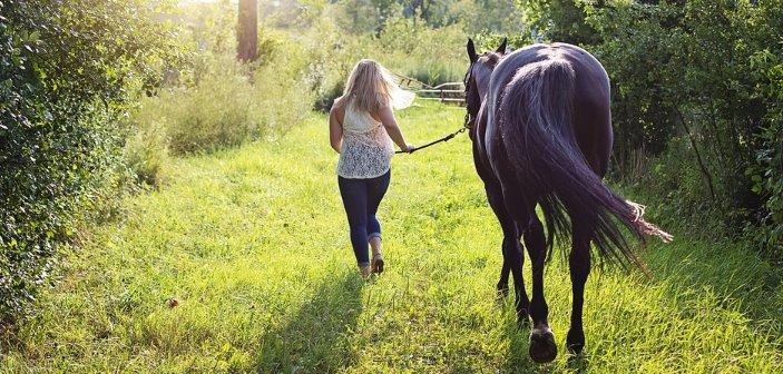 Chic@s ¿os queréis comprar un caballo? ¡pues tenemos que hablar!