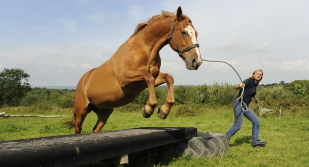 El «agility» equino