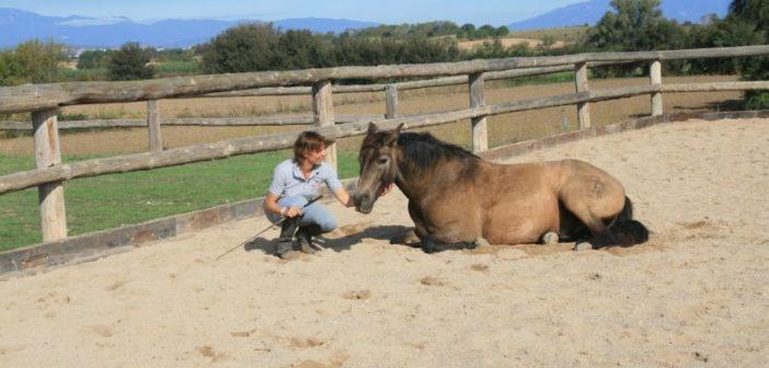 Equi-Ego – El «Alter Ego» en la equitación