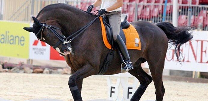 Hiperflexión, rollkur o caballo encapotado